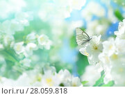 Купить «Весенний пейзаж», фото № 28059818, снято 19 июня 2016 г. (c) Икан Леонид / Фотобанк Лори
