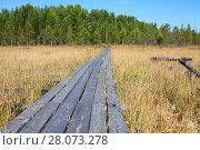Купить «Деревянные мостки через желтый заболоченный берег реки к зеленому лесу», фото № 28073278, снято 7 сентября 2011 г. (c) Кекяляйнен Андрей / Фотобанк Лори
