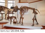 Купить «Сохранившийся в вечной мерзлоте скелет мамонта. Экспонат музея Природы и человека в городе Ханты-Мансийск», фото № 28094126, снято 15 апреля 2012 г. (c) Юрий Карачев / Фотобанк Лори