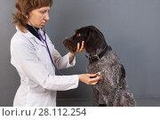 Купить «Ветеринар со стетоскопом осматривает собаку», фото № 28112254, снято 8 января 2018 г. (c) Павел Родимов / Фотобанк Лори