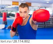 Купить «Man boxer is training in gloves in gym.», фото № 28114802, снято 21 августа 2017 г. (c) Яков Филимонов / Фотобанк Лори