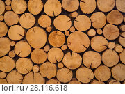 Купить «Closeup of logs of trees outdoor, pile of yellow round wood logs», фото № 28116618, снято 23 января 2017 г. (c) Losevsky Pavel / Фотобанк Лори