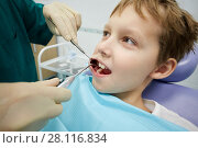 Купить «Closeup dentist examines mouth and teeth of boy sitting in armchair», фото № 28116834, снято 19 октября 2016 г. (c) Losevsky Pavel / Фотобанк Лори