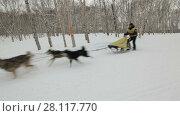 """Купить «Гонка на собачьих упряжках """"Берингия""""», видеоролик № 28117770, снято 4 марта 2018 г. (c) А. А. Пирагис / Фотобанк Лори"""
