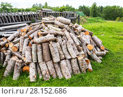 Купить «Stock pile of timber, chopped down trees at the forest in summertime», фото № 28152686, снято 24 июля 2017 г. (c) FotograFF / Фотобанк Лори