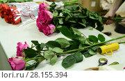 Купить «florist collects pink roses in bouquet», видеоролик № 28155394, снято 11 марта 2018 г. (c) Володина Ольга / Фотобанк Лори