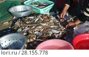 Купить «The wife of a Vietnamese fisherman sorts fresh catch seafood», видеоролик № 28155778, снято 21 декабря 2016 г. (c) Алексей Кузнецов / Фотобанк Лори