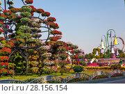 Купить «Парк цветов в Дубае (Dubai Miracle Garden). Объединённые Арабские Эмираты», фото № 28156154, снято 23 декабря 2014 г. (c) Сергей Афанасьев / Фотобанк Лори