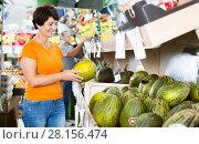 Купить «Female is choosing green melons», фото № 28156474, снято 22 октября 2017 г. (c) Яков Филимонов / Фотобанк Лори