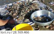 Купить «The hands of a Vietnamese fisherman sorts fresh catch seafood  on the seashore, fishing village Mui Ne», видеоролик № 28169466, снято 17 февраля 2017 г. (c) Алексей Кузнецов / Фотобанк Лори