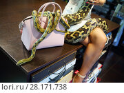 Купить «Woman in white sits with two snakes on table, noface, focus on bag and snake», фото № 28171738, снято 18 июля 2016 г. (c) Losevsky Pavel / Фотобанк Лори