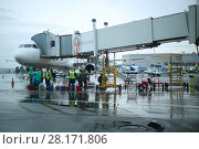 Купить «MOSCOW - JUL 20, 2016: Cleaning women and aircraft during boarding in Domodedovo airport, Airport route network covers more than 189 destinations», фото № 28171806, снято 20 июля 2016 г. (c) Losevsky Pavel / Фотобанк Лори