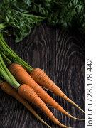 Купить «Freshly grown carrots», фото № 28178442, снято 17 июля 2016 г. (c) Jan Jack Russo Media / Фотобанк Лори