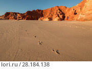 Купить «Footsteps on the white sands, Kimberley, Broome, Western Australia, Australia July 2016.», фото № 28184138, снято 15 августа 2018 г. (c) Nature Picture Library / Фотобанк Лори