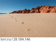 Купить «Footsteps on the white sands, Broome, Kimberley, Western Australia. July 2016.», фото № 28184146, снято 15 августа 2018 г. (c) Nature Picture Library / Фотобанк Лори