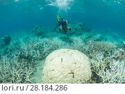 Купить «Photographer Jurgen Freund taking pictures of coral bleaching in the northern Great Barrier Reef, Queensland, Australia. March 2017. Model released.», фото № 28184286, снято 16 марта 2018 г. (c) Nature Picture Library / Фотобанк Лори