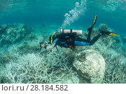 Купить «Photographer Jurgen Freund taking pictures of coral bleaching in the northern Great Barrier Reef, Queensland, Australia March 2017. Model released.», фото № 28184582, снято 22 марта 2018 г. (c) Nature Picture Library / Фотобанк Лори
