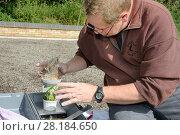 Купить «Barn owl (Tyto alba) chick being weighed after ringing during a licensed nest box survey, Suffolk, UK, July. Model released.», фото № 28184650, снято 23 марта 2018 г. (c) Nature Picture Library / Фотобанк Лори
