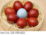 Купить «Крашенные пасхальные яйца красного и голубого цвета», фото № 28189602, снято 16 апреля 2017 г. (c) Dmitry29 / Фотобанк Лори