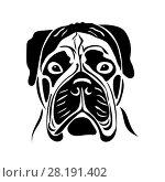 Купить «Portrait of a bullmastiff», иллюстрация № 28191402 (c) Сергей Лаврентьев / Фотобанк Лори