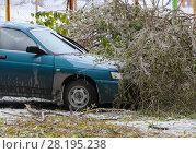 Купить «Tree top which fell to car in winter», фото № 28195238, снято 19 октября 2014 г. (c) Юрий Бизгаймер / Фотобанк Лори