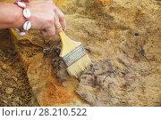Расчистка средневековой могилы археологом. Стоковое фото, фотограф Круглов Олег / Фотобанк Лори