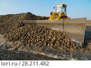 Купить «KRASNODAR REGION, RUSSIA - NOV 5, 2015: Bulldozer shoveling heap of sugar beet after harvest, In 2015 in Krasnodar region yields reached record level - 58.4 centners per hectare», фото № 28211482, снято 5 ноября 2015 г. (c) Losevsky Pavel / Фотобанк Лори
