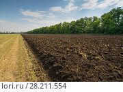 Купить «Brown ground in half-plowed field after harvest near forest belt at summer», фото № 28211554, снято 7 июля 2015 г. (c) Losevsky Pavel / Фотобанк Лори