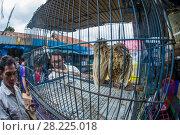 Купить «Scops owls (Otus sp.) bleached to look albino for sale, Jakarta, Indonesia», фото № 28225018, снято 12 декабря 2018 г. (c) Nature Picture Library / Фотобанк Лори