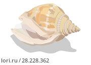 Seashell. Стоковая иллюстрация, иллюстратор Александр Володин / Фотобанк Лори