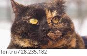 Купить «Portrait of a cat», видеоролик № 28235182, снято 16 марта 2018 г. (c) Илья Шаматура / Фотобанк Лори