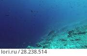 Купить «Tiger Shark emerges from the depths of the reef», видеоролик № 28238514, снято 27 марта 2018 г. (c) Некрасов Андрей / Фотобанк Лори