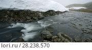 Купить «Stream through tundra and snow cornice, Nordkinn Peninsula, Norway», фото № 28238570, снято 20 апреля 2018 г. (c) Nature Picture Library / Фотобанк Лори