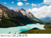 Купить «Peyto Lake, Banff National Park, Canadian Rockies, Alberta, August 2012.», фото № 28238670, снято 31 мая 2020 г. (c) Nature Picture Library / Фотобанк Лори