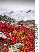 Купить «Harding icefield  receeding rapidly due to global warming,Kenai Fjords National Park,  Alaska, USA, September 2004.», фото № 28238970, снято 20 апреля 2018 г. (c) Nature Picture Library / Фотобанк Лори