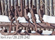 Купить «Деревянная скульптура первым первопроходцам на территории Ялуторовского острога. Ялуторовск. Тюменская область», фото № 28239242, снято 16 марта 2018 г. (c) Сергей Афанасьев / Фотобанк Лори