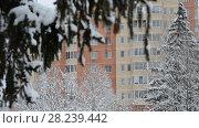 Купить «branch of spruce in snow Against house in Moscow, Russia.», видеоролик № 28239442, снято 31 января 2018 г. (c) Володина Ольга / Фотобанк Лори