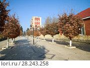 Купить «Солнечный январский день на городской улице. Ленкорань, Азербайджан», фото № 28243258, снято 31 декабря 2017 г. (c) Виктор Карасев / Фотобанк Лори