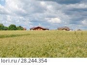 Купить «Ржаное поле на фоне сельских домов летним солнечным днем», фото № 28244354, снято 9 июля 2016 г. (c) Елена Коромыслова / Фотобанк Лори
