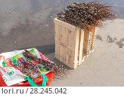 Купить «Продажа веточек вербы в Вербное воскресенье», эксклюзивное фото № 28245042, снято 1 апреля 2018 г. (c) Александр Щепин / Фотобанк Лори