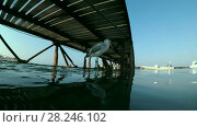 Купить «Arabian Reef-egret or Western Reef Heron (Egretta gularis schistacea) sits on a pier and looks on the school of Hardyhead Silverside (Atherinomorus lacunosus) - underwater split level, Red sea, Marsa Alam, Abu Dabab, Egypt», видеоролик № 28246102, снято 25 октября 2017 г. (c) Некрасов Андрей / Фотобанк Лори