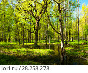 Купить «Spring forest landscape - bright green spring forest trees and flooded forest glade. Spring forest», фото № 28258278, снято 15 мая 2011 г. (c) Зезелина Марина / Фотобанк Лори