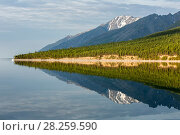 Купить «West shore of Lake Baikal with reflection of mountains and forest, Siberia, Russia.», фото № 28259590, снято 23 апреля 2019 г. (c) Nature Picture Library / Фотобанк Лори