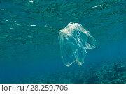 Купить «Plastic bag floating in the ocean, Lesser Sunda Islands, Indonesia», фото № 28259706, снято 23 мая 2019 г. (c) Nature Picture Library / Фотобанк Лори