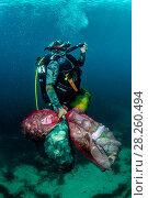 Купить «Scuba diver removing plastic marine litter from the sea bed.  Mljet National Park, Mljet  Island, Croatia. May 2015.», фото № 28260494, снято 18 октября 2018 г. (c) Nature Picture Library / Фотобанк Лори