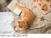 Купить «red tabby cat lying on blanket at home in winter», фото № 28261630, снято 15 ноября 2017 г. (c) Syda Productions / Фотобанк Лори