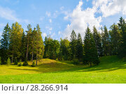 Купить «Forest spring landscape - dense forest trees in the valley», фото № 28266914, снято 21 сентября 2017 г. (c) Зезелина Марина / Фотобанк Лори