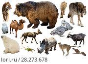 Купить «asia animals isolated», фото № 28273678, снято 13 декабря 2018 г. (c) Яков Филимонов / Фотобанк Лори