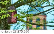 Купить «Birdhouse hangs on tree», видеоролик № 28275550, снято 26 марта 2018 г. (c) BestPhotoStudio / Фотобанк Лори