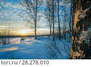 Купить «Winter landscape, sunset among the birches», фото № 28278010, снято 21 марта 2018 г. (c) Алексей Маринченко / Фотобанк Лори
